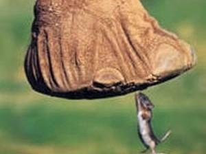 Mouse - elephant